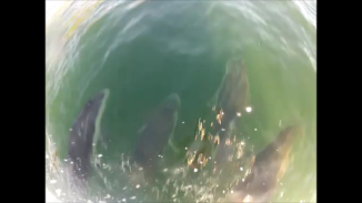 dolphins 4