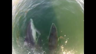 dolphins burke 1