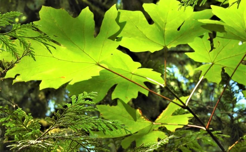 Forest Walk – GraceHarbor